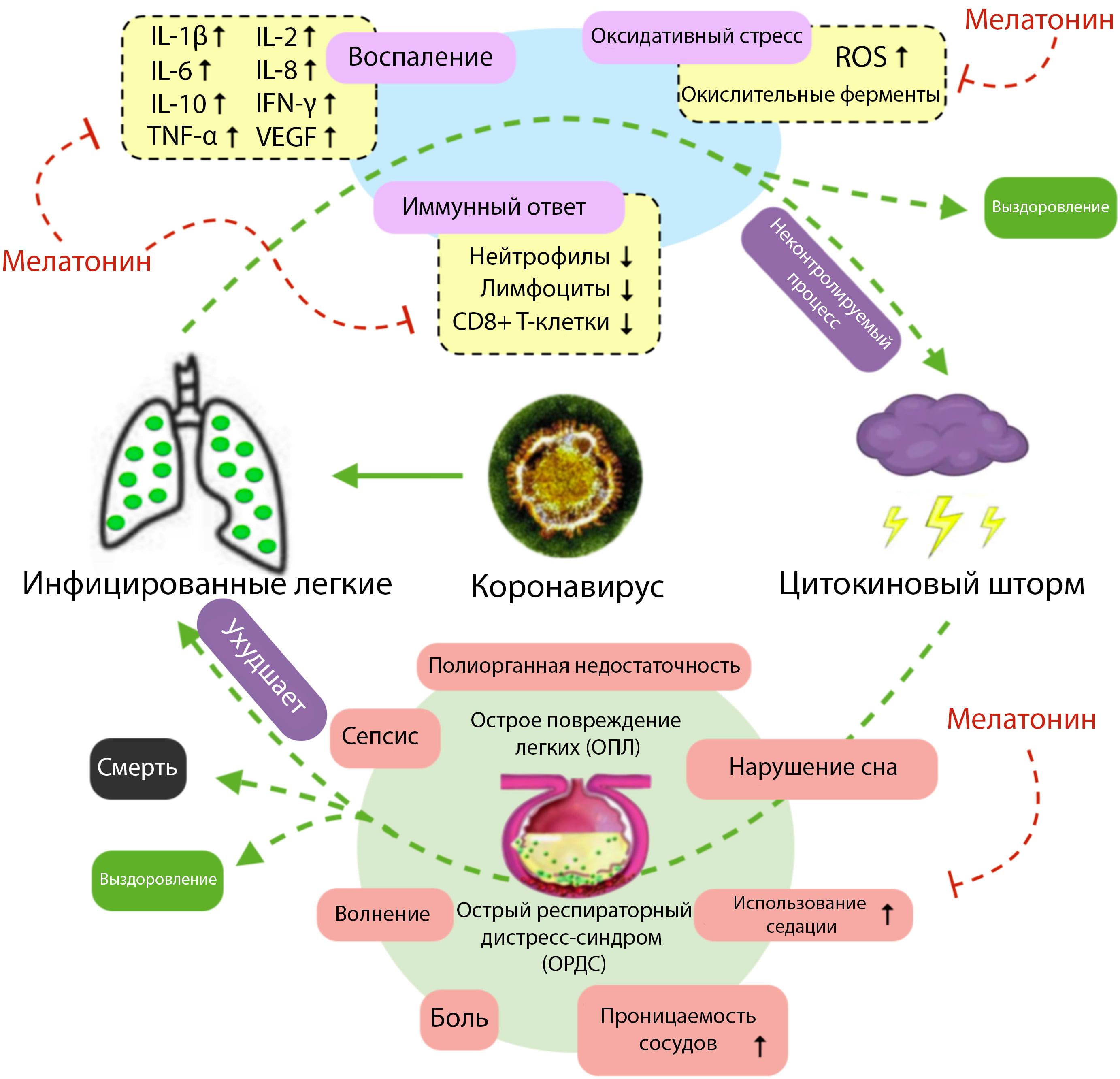 Рис.1. Патогенез COVID-19 и потенциальное адъювантное применение мелатонина при коронавирусе