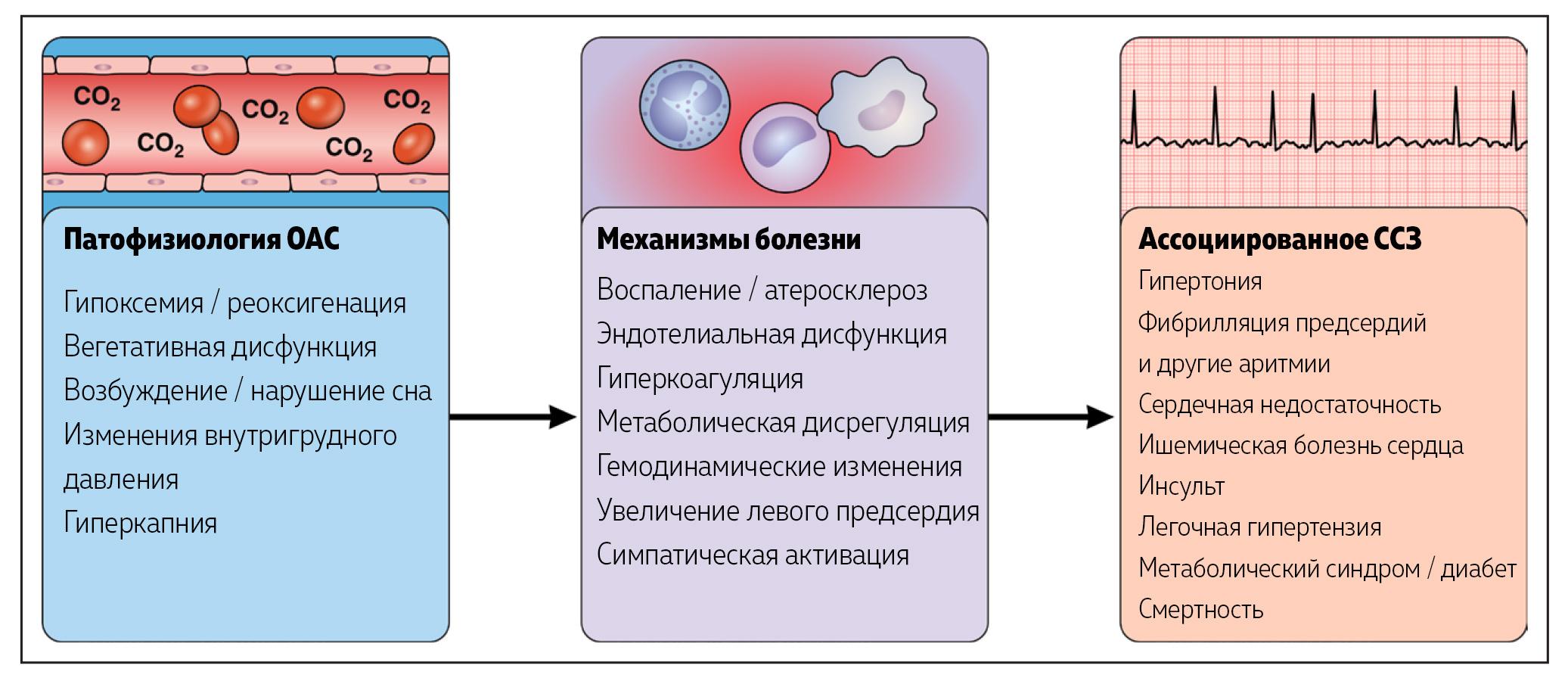 Рисунок 2. Сердечно-сосудистые осложнения синдрома обструктивного апноэ сна (СОАС). ССЗ - сердечно-сосудистые заболевания.